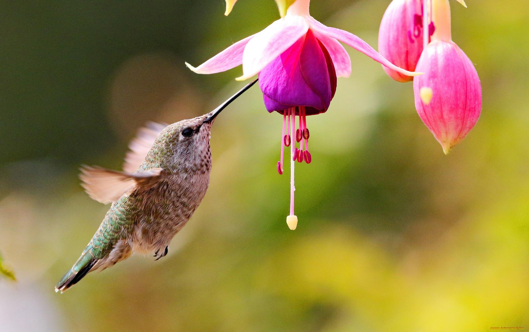 расцветки колибри фото мавританский дворец